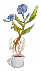 Chicory_1.24