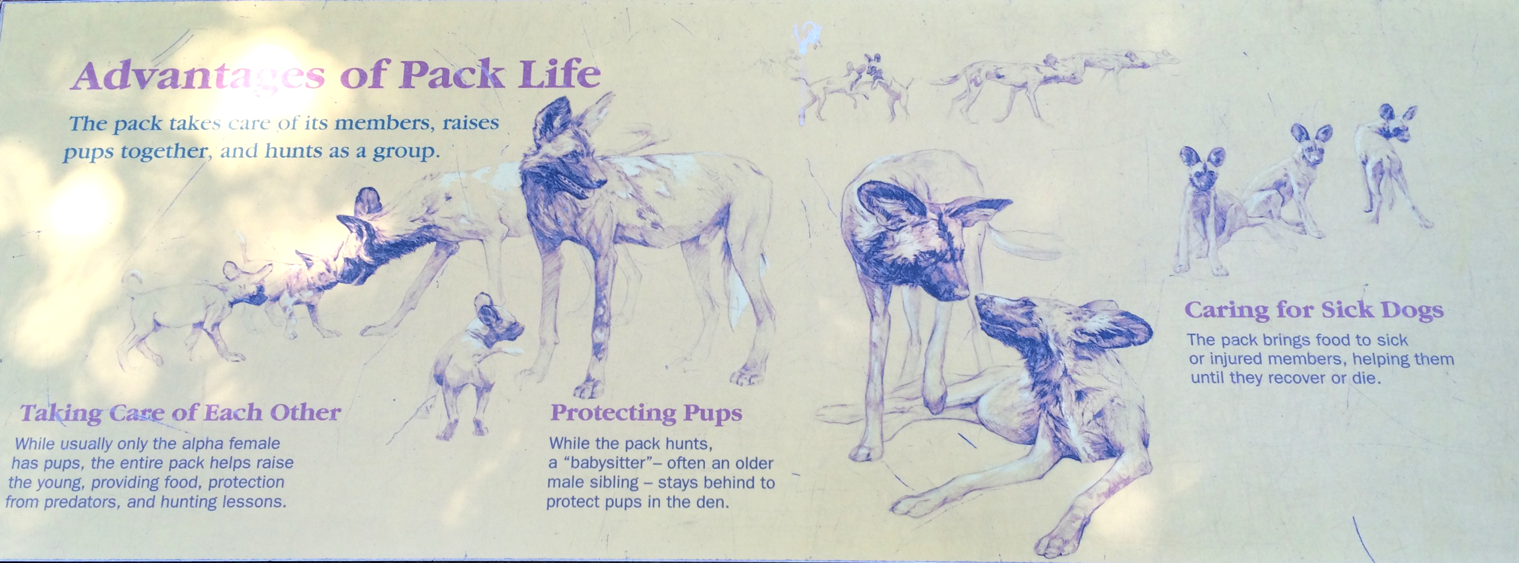 African Wild Dogs Sign