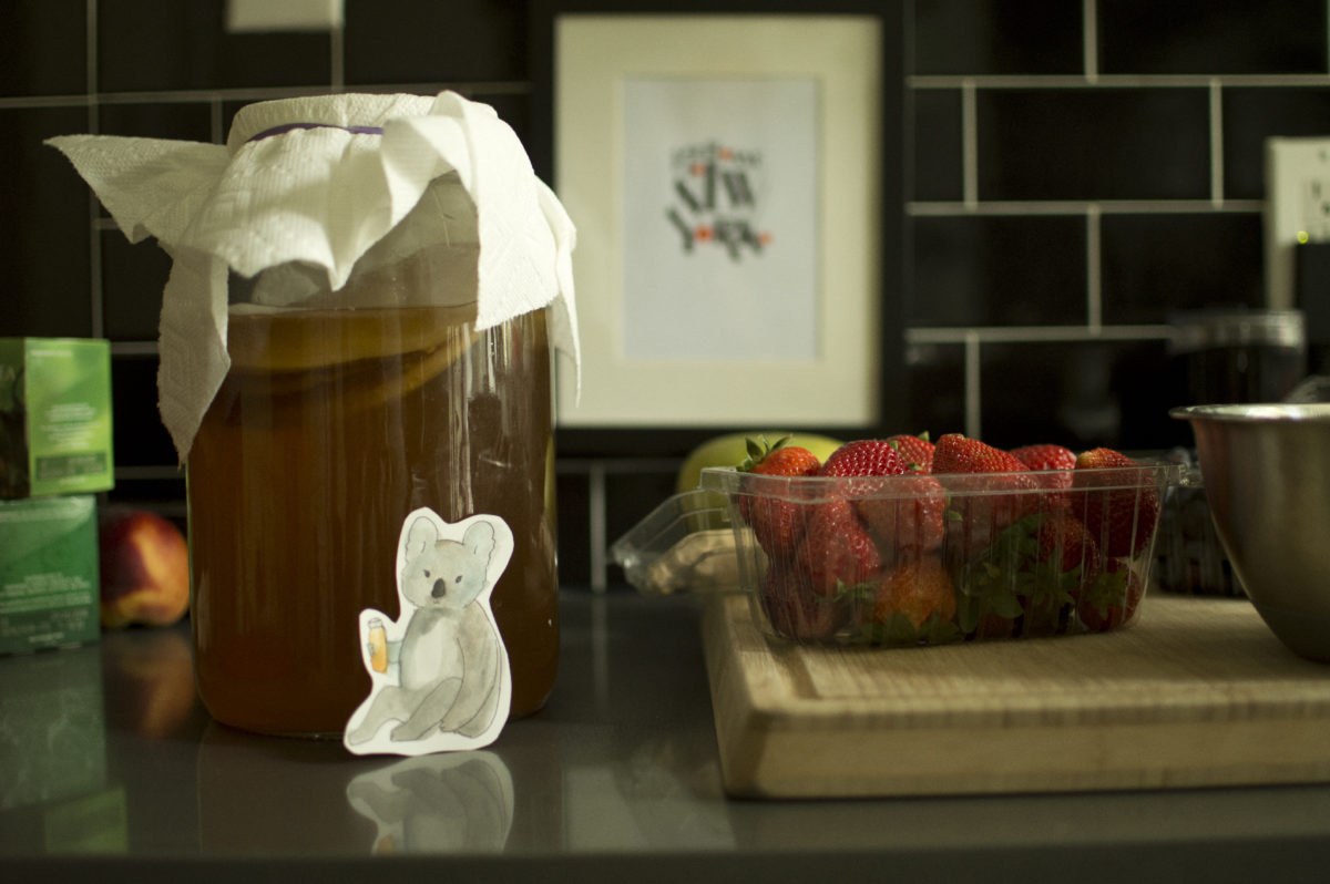 Brewing with Kombucha Koala